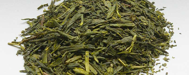 Green Tea and Weight Loss - Featured Image
